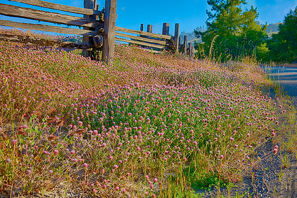 Photo of Split Rail fence with Clover