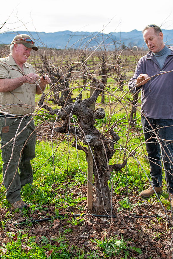 Ed Berry (left) and Jim Klein (right) discuss pruning Cabernet vines for the upcoming vintage.