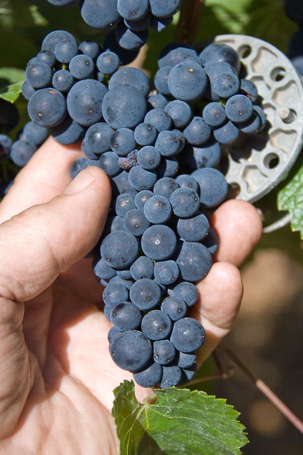 Navarro Vineyards - 2008 Pinot Noir