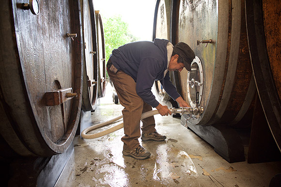 Manual, cellar master, attaching a hose to large oak cask filled with wine.