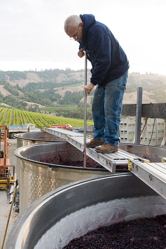 Winery worker stands above an open top tank and uses a tool to punch down red grape must.