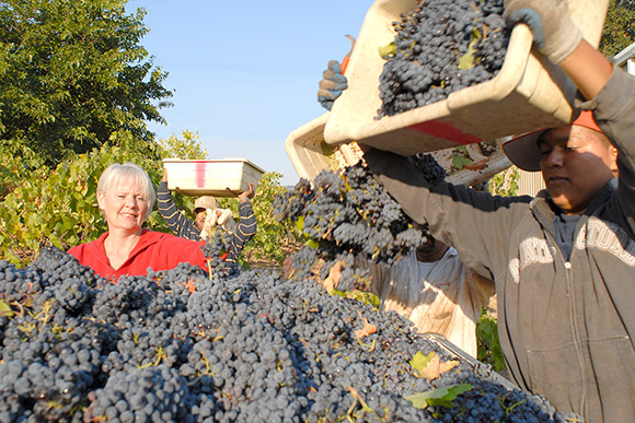 Debbie Pallini overseeing her harvest as pickers dump fruit into a gondola.