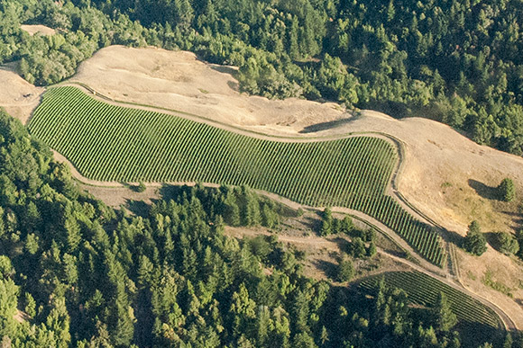An aerial view of Middle Ridge and Fox Point vineyards in rural Anderson Valley.