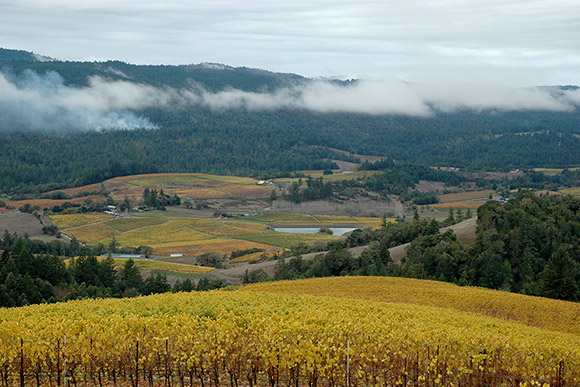 View from Navarro's Middle Ridge Pinot Gris vineyard, late in the season.
